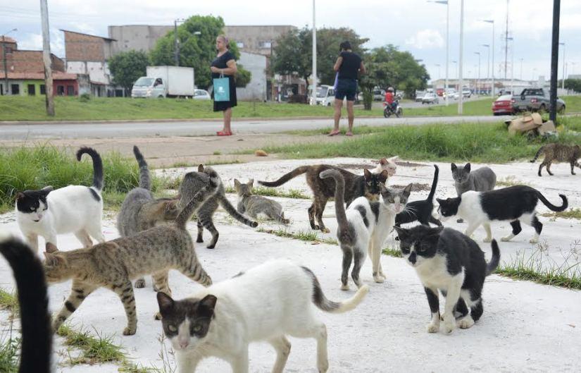 gatoshonorio